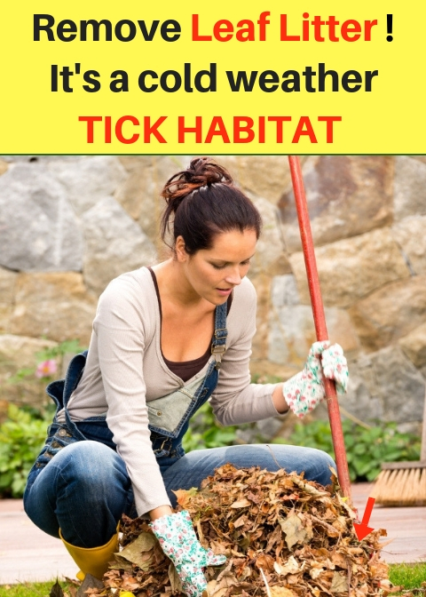 Removing Leaf Litter, a Tick Habitat